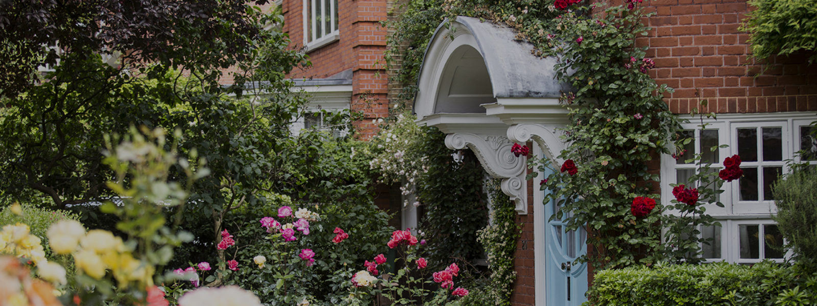 Front garden of the Freud Museum, with roses in bloom